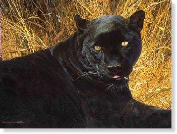panthere10b.jpg